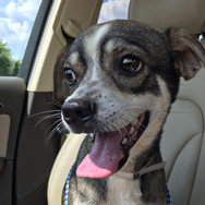 Adopted: Reedy