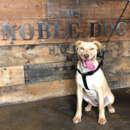 Adopted: Lottie