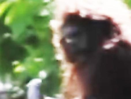 The Beacon Bigfoot Pt.1