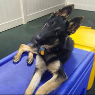 Adopted: Kylo