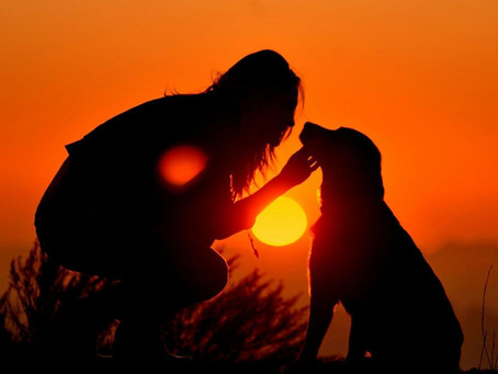 Il cane, l'uomo, l'amore...