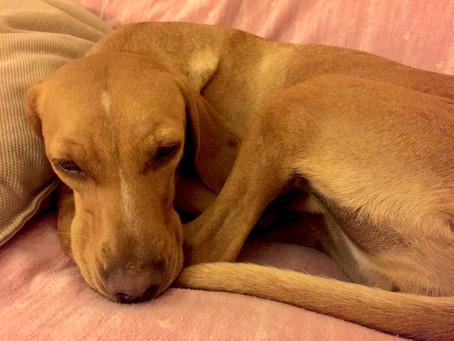 Dormi, dormi, mio piccolo lupo...