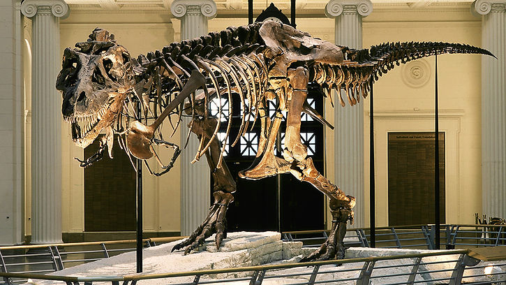 150615095540-dino-museums-2015-chicago.j