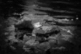 hannah-domsic-549198-unsplash.jpg