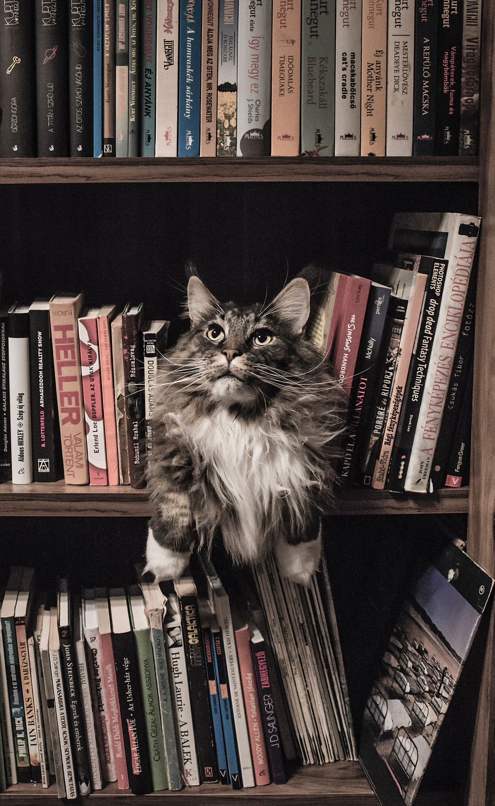 Cat sitting in the middle of a book shelf