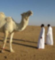 Camel-saudi-arabia-95500_640_edited.jpg