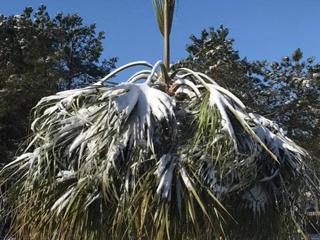 Palm Care Tips for the Winter