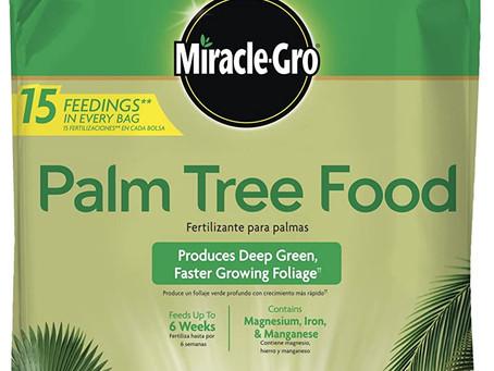 How to Fertilize a Palm Tree
