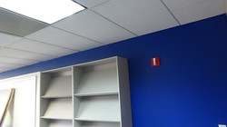 Blue Walls and White Shelving