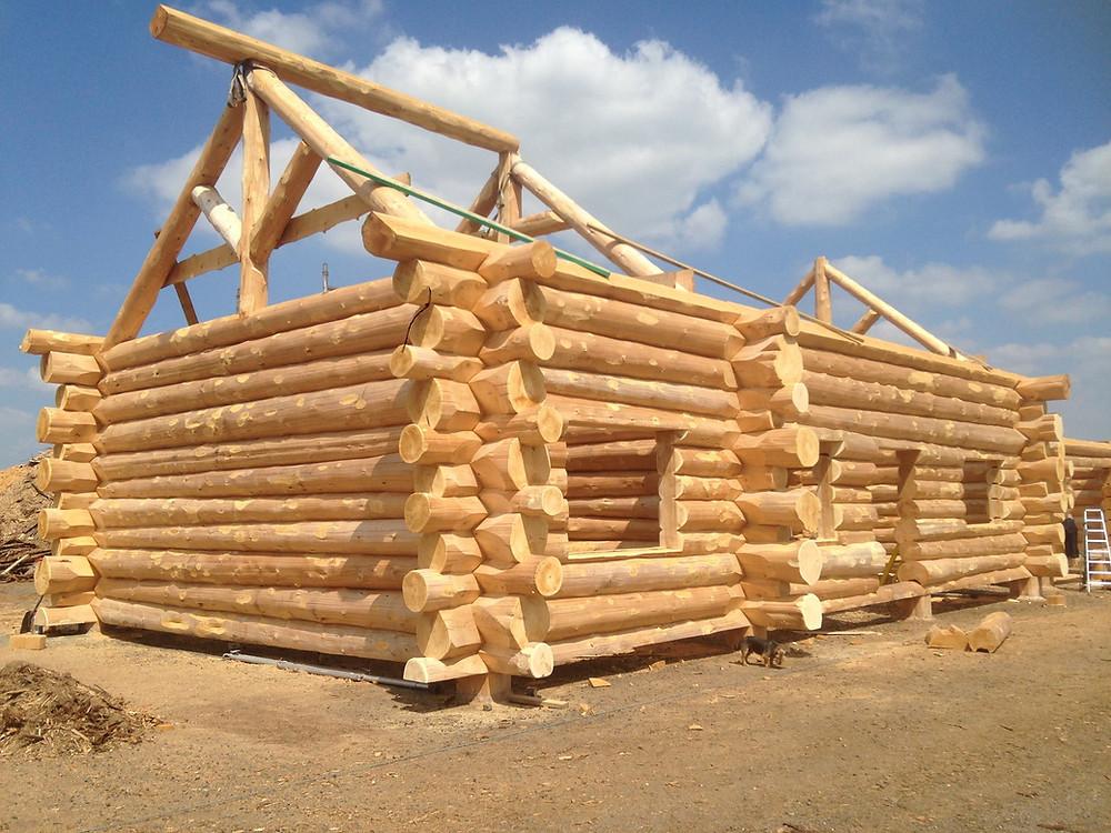A log house under construction