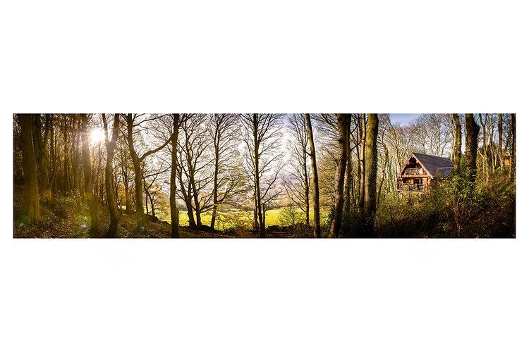 Swinney Wood Pano.jpg