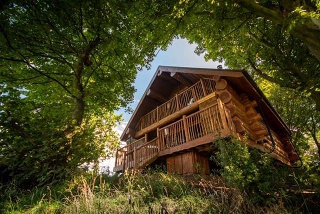 A log cabin seen through trees