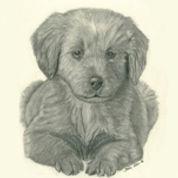 puppy sm.jpg