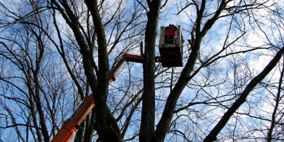 Bäume in der Gemeinde - Gesund und Sicher durch richtige Planung und Pflege
