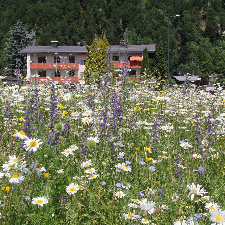Vom grünen Rasen zur bunten Blumenwiese