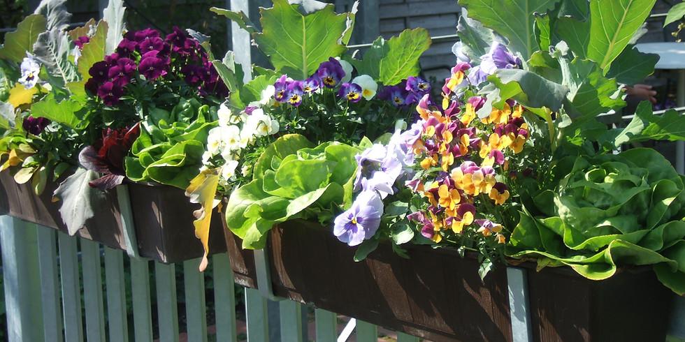 Gemüseanbau am Balkon und Terrasse