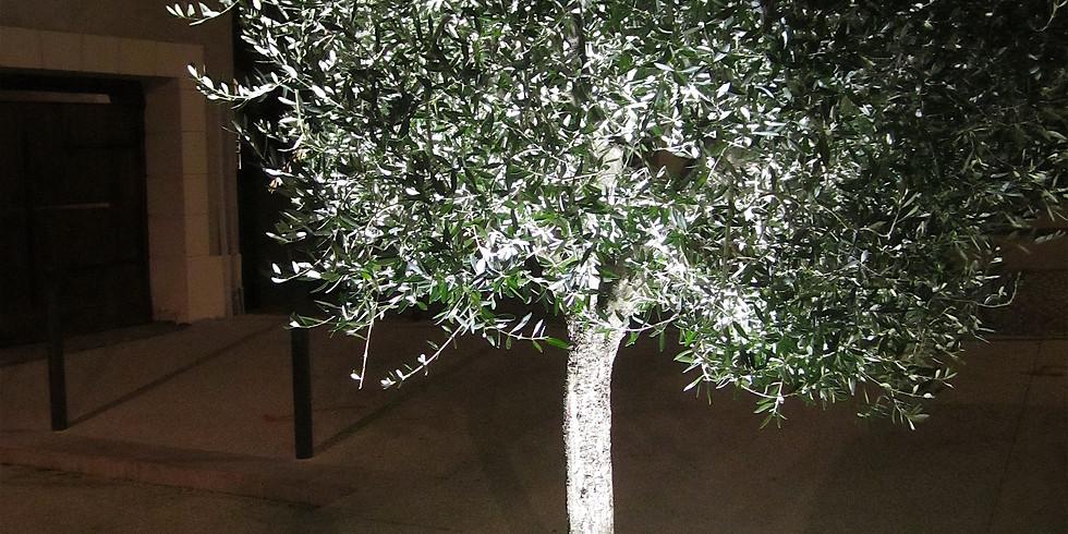 Nachts in meinem Garten - über Kunstlicht und seine Auswirkungen
