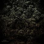 Tachypsychia album cover2 500.jpg
