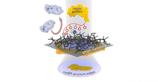 How smart, ultrathin nanosheets go fishing for proteins