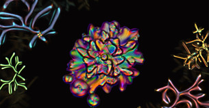 Drops of liquid crystal molecules branch out into strange structures