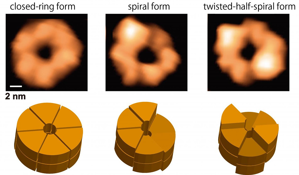 This figure shows snapshots (upper panels) and schematics (lower panels) of the ClpB closed rings from the movie obtained by HS-AFM. The closed rings are classified into round, spiral and twisted-half-spiral. A bar on upper left panel designates a scale of 2 nm. @ NINS/IMS