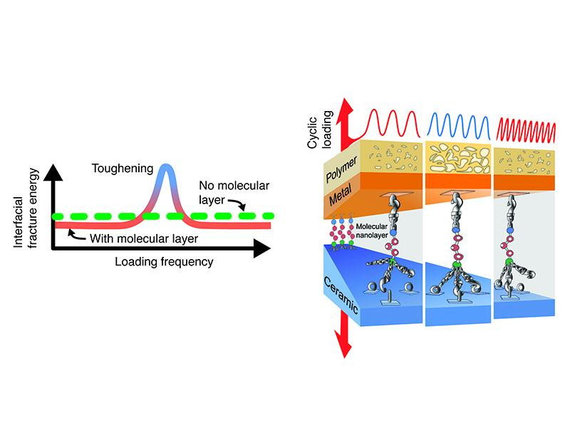 Illustrations of frequency-dependent toughening in a polymer-metal-nanoglue-ceramic composite @  Rensselaer