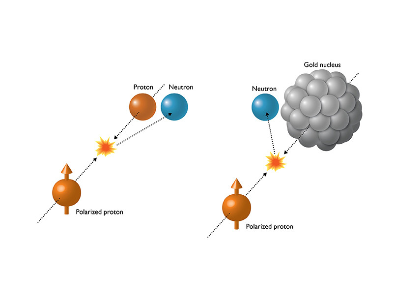When spin-aligned (polarized) protons collide with another beam of protons, particles called neutrons come out with a slight rightward preference. But when polarized protons collide with much larger gold nuclei, the neutrons' directional preference becomes larger and switches to the left. These surprising results imply that the mechanisms producing particles along the proton projectile's path may be very different in these two types of collisions. @ DOE