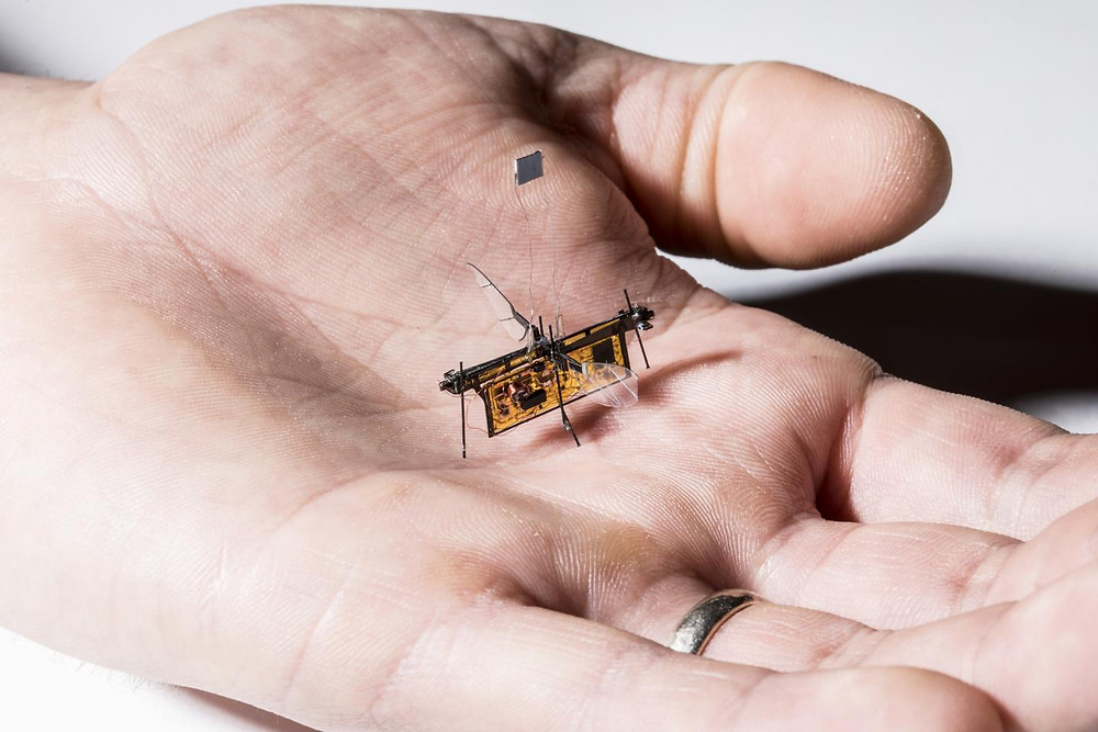 RoboFly, the first wireless insect-sized flying robot, is slightly heavier than a toothpick. @ Mark Stone/University of Washington