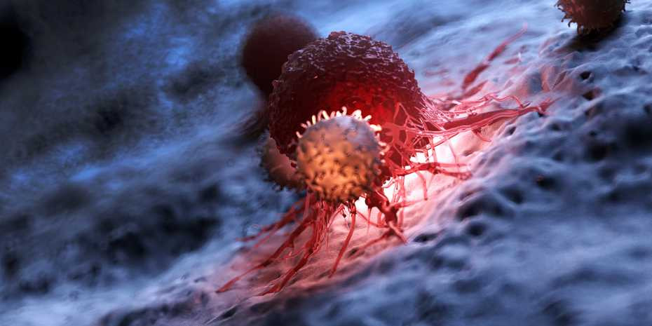 Cancer immunotherapy enables T cells (front) to attack and eliminate tumour cells (dark red). @ Shutterstock