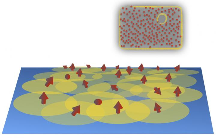 Randomly sprinkled magnetic atoms (red arrows) on a superconducting surface may give rise to a topological superconducting phase. Inset: The onset of the topological phase is signaled by the appearance of so-called Majorana edge mode encircling the system. @ Teemu Ojanen