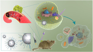 Custom nanoparticle regresses tumors when exposed to light