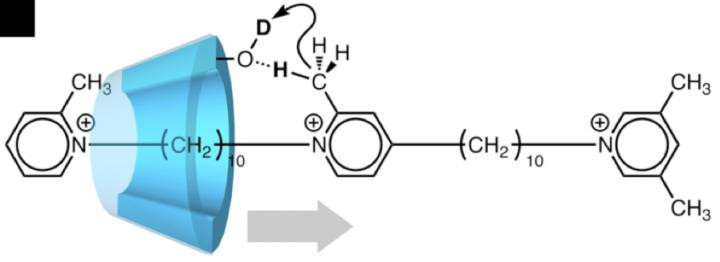 A pseudo-rotaxane (artificial molecular machine) in which translational movement of α cyclodextrin (α -CD) coincides with deuteration. As α -CD moves along the two-station axis molecule as shown by the gray arrow, it catalyzes deuteration of the axis molecule. @ Osaka University