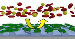 'Smart' surfaces to help blood-vessel grafts knit better, more safely