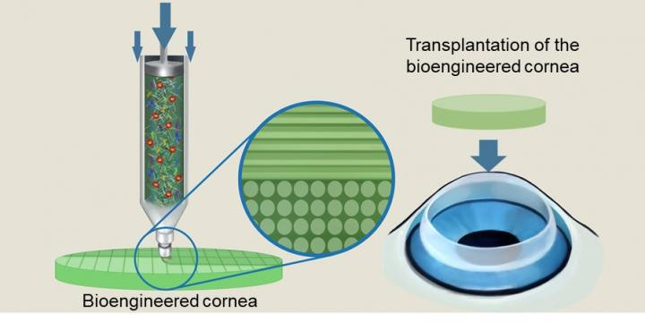Schematic illustration of the alignment of collagen fibers within the nozzle during bioink extrusion.  @ POSTECH