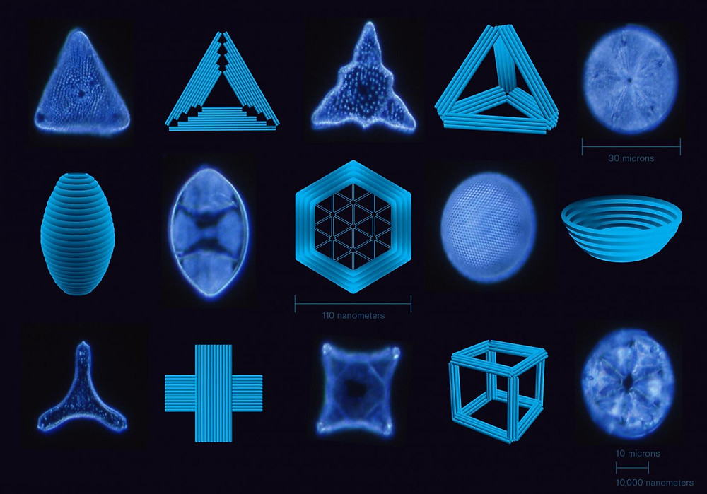 A selection of nanostructures built using DNA origami, alongside naturally-occurring diatoms -- single-celled organisms that come in many beautiful and elaborate forms. They are ubiquitous inhabitants of the world's lakes, rivers, and oceans. A scale shows the sizes of the nanostructures and diatoms. @ Shireen Dooling