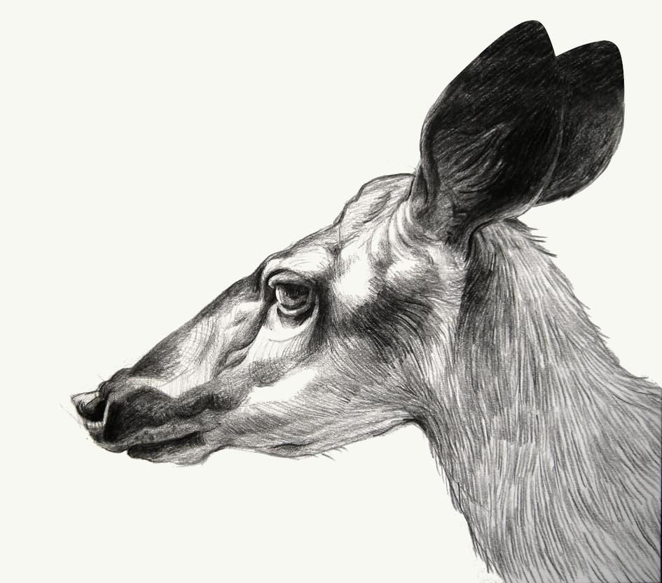 2020.10.31 deer.png