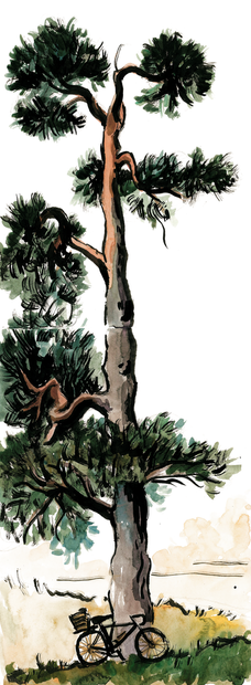 2020.09.29 scotch pine SMALL.png