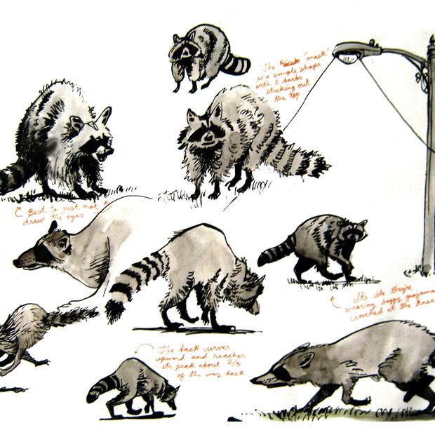 2020.11.16 raccoons.png