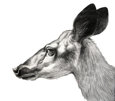 2020.10.31 deer4.png