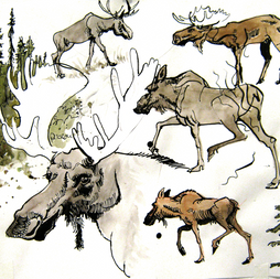 2020.11.16 moose.png