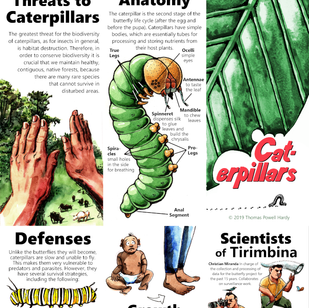 Informational Brochure about Caterpillars for a Costa Rican Biological Reserve