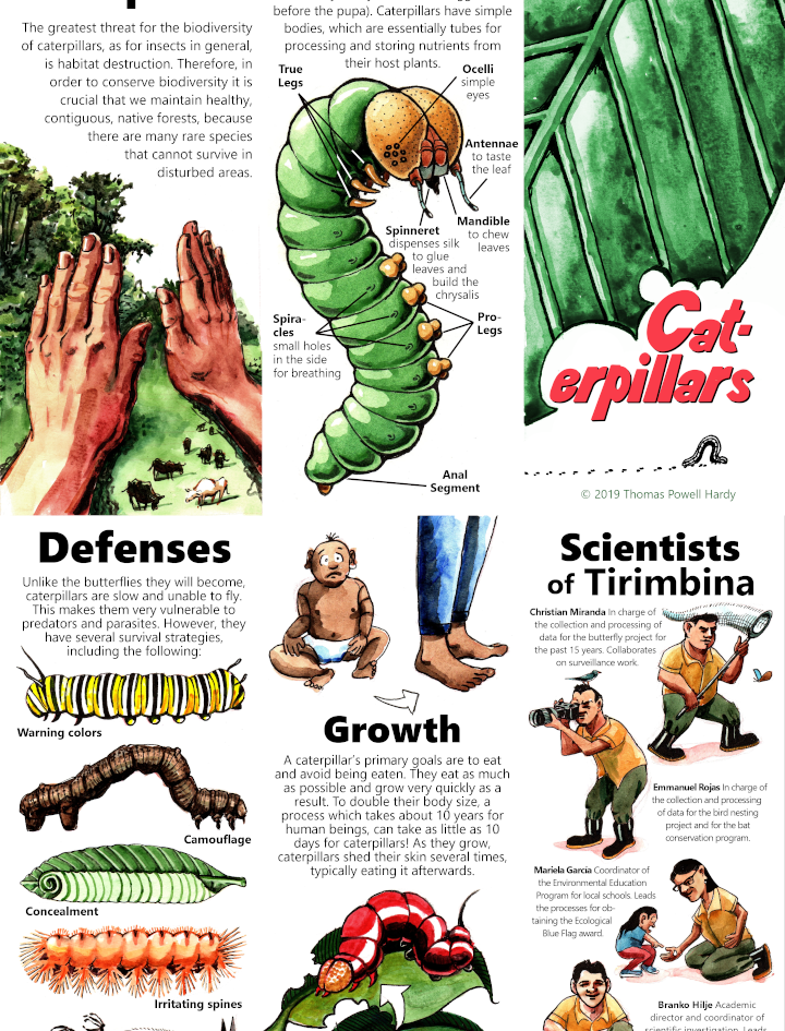 POSTERS caterpillars.png