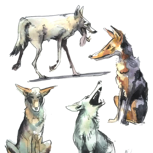 2021.01.09 coyote .png