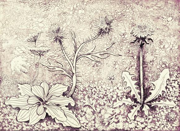 Portrait of Dandelion, Thistle, Plantain, Clover, Sorrel, and Creeping Charlie