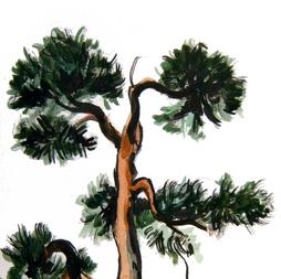 2020.09.29 SCOTCH pine.png