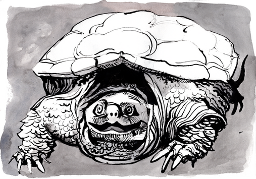 2021.06.11 turtle2.png