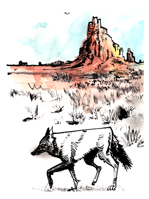 2021.06.19 coyote new mexico.png