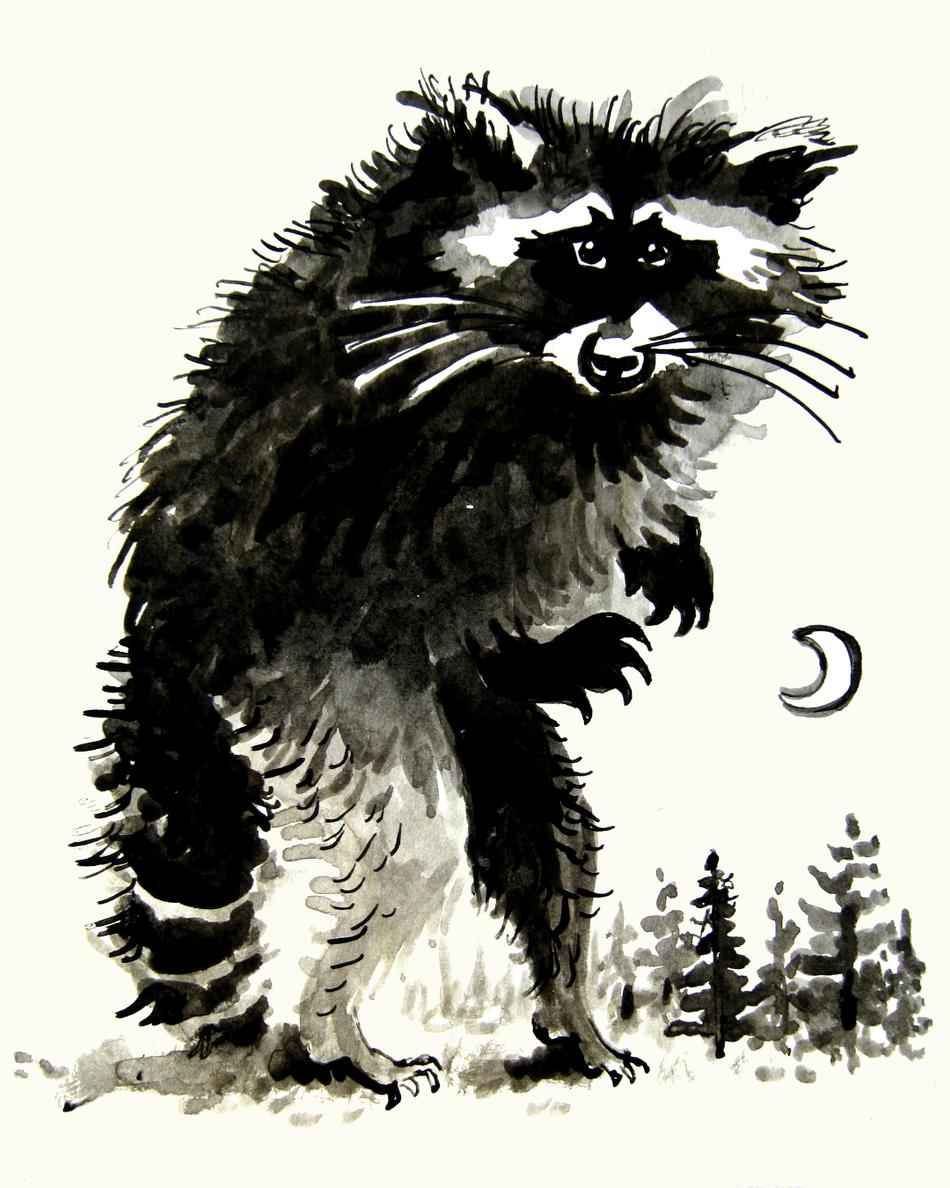 2020.10.27 raccoon.png