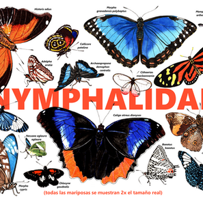 Butterfly poster for a Costa Rican biological reserve