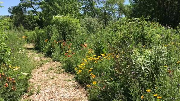 Stroll in the Pollinator Garden